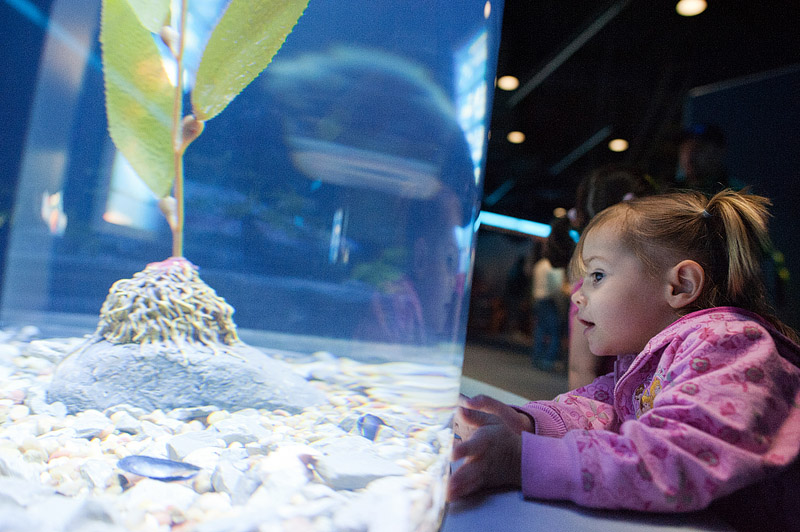 Toddler looking at fish at Tennessee Aquarium.