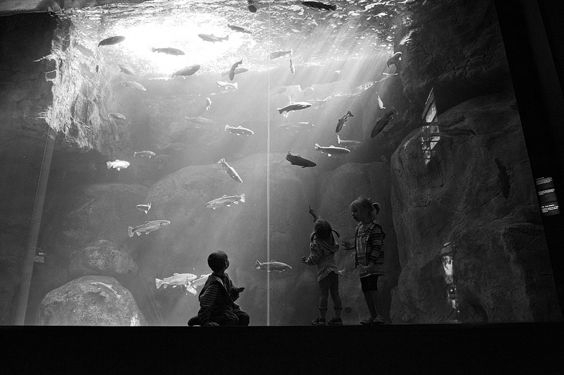 Kids looking at fish in Chattanooga at the aquarium.