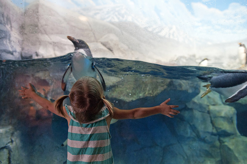 Toddler trying to hug penguin at Tennessee Aquarium.