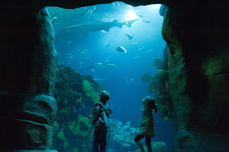 Brother and sister watching shark swim by at the Tennessee Aquarium in Chattanooga Tennessee.