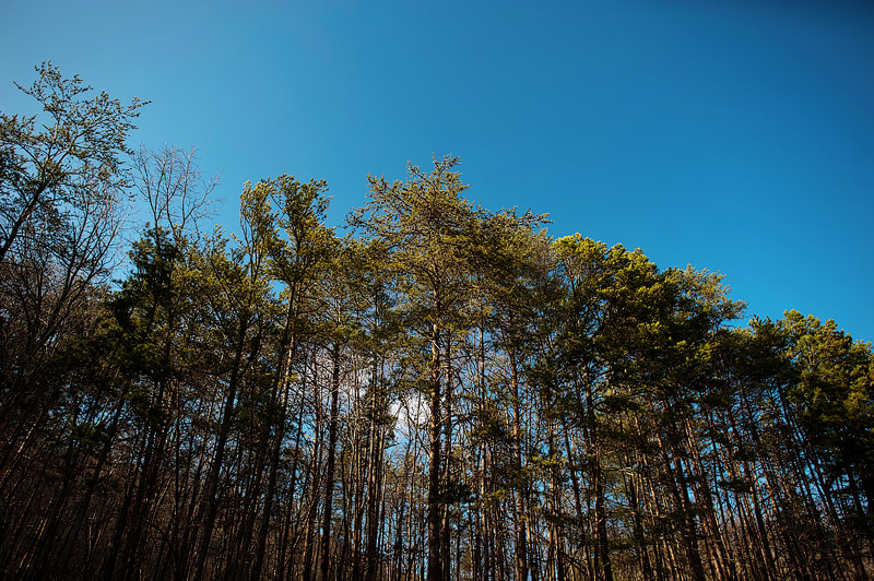 Beautiful Cherokee forest trees.