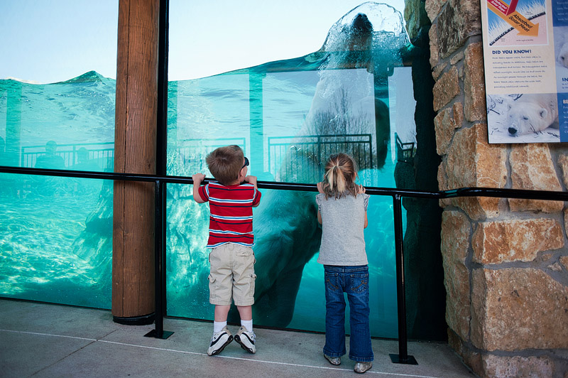 Children watch polar bear swim at zoo