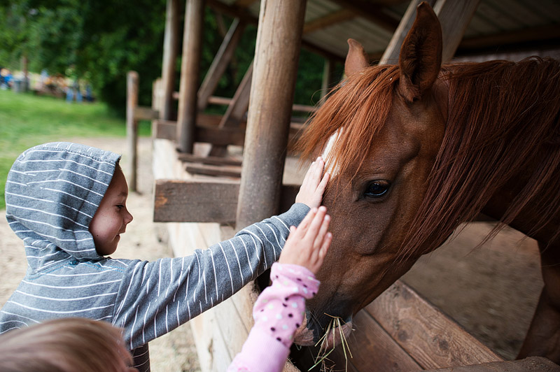 Kids pet a horse in Oregon.