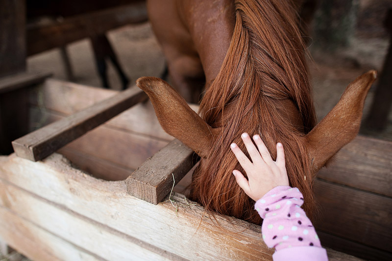 Girl petting a horse at Out N About treehouses.