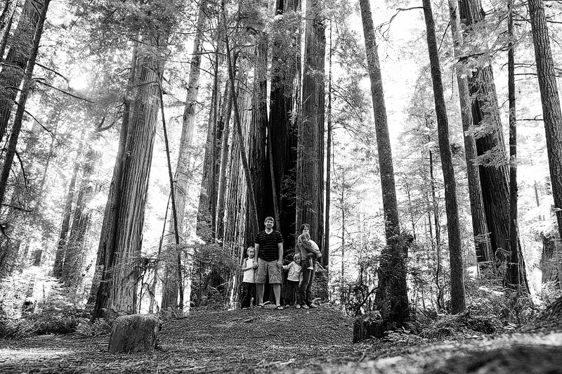 Family portrait in the Redwood National forest.