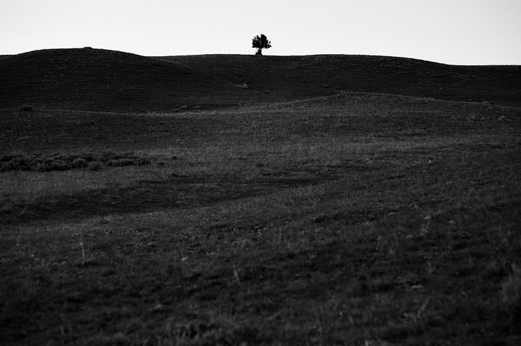 A Lone Tree on a hill.