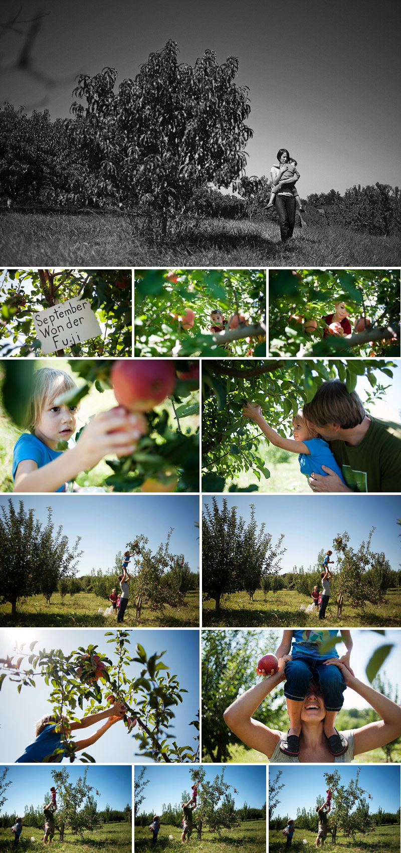 apples are fun to pick schweizer orchard