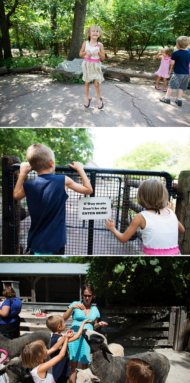 kids feeding the sheep at the zoo