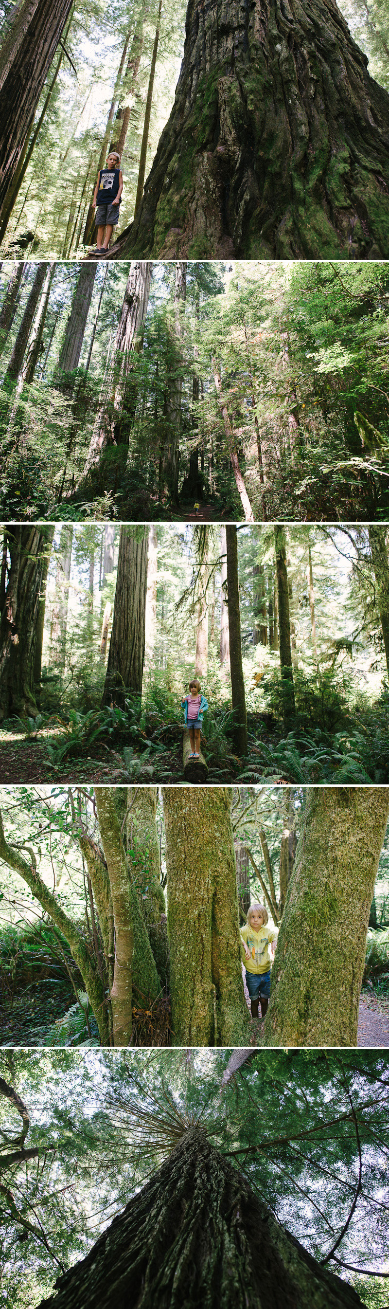 family walking trail in the redwoods