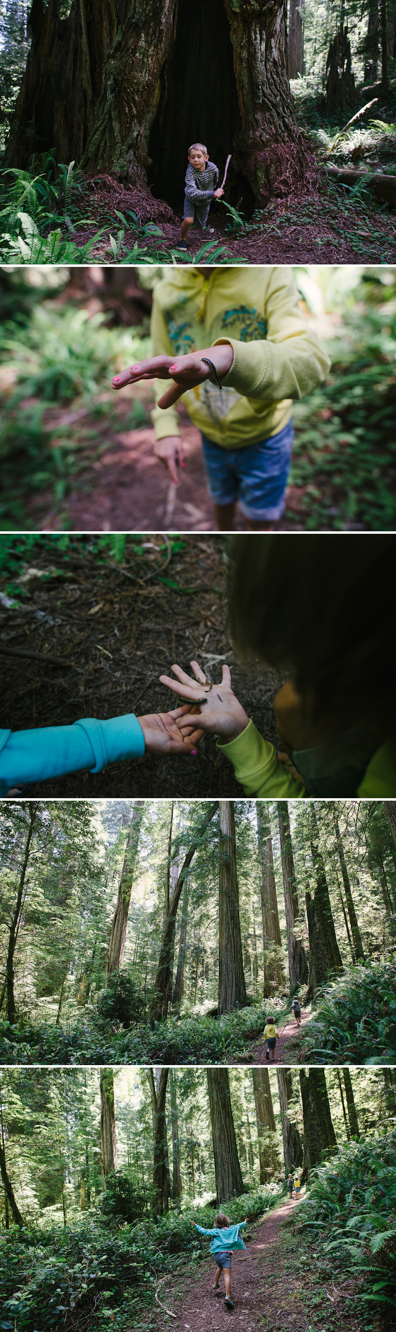 kids playing with bugs in the redwood forest