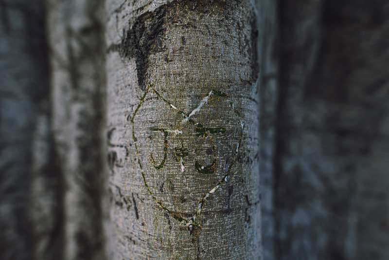 Couple carved initials in a tree in California.