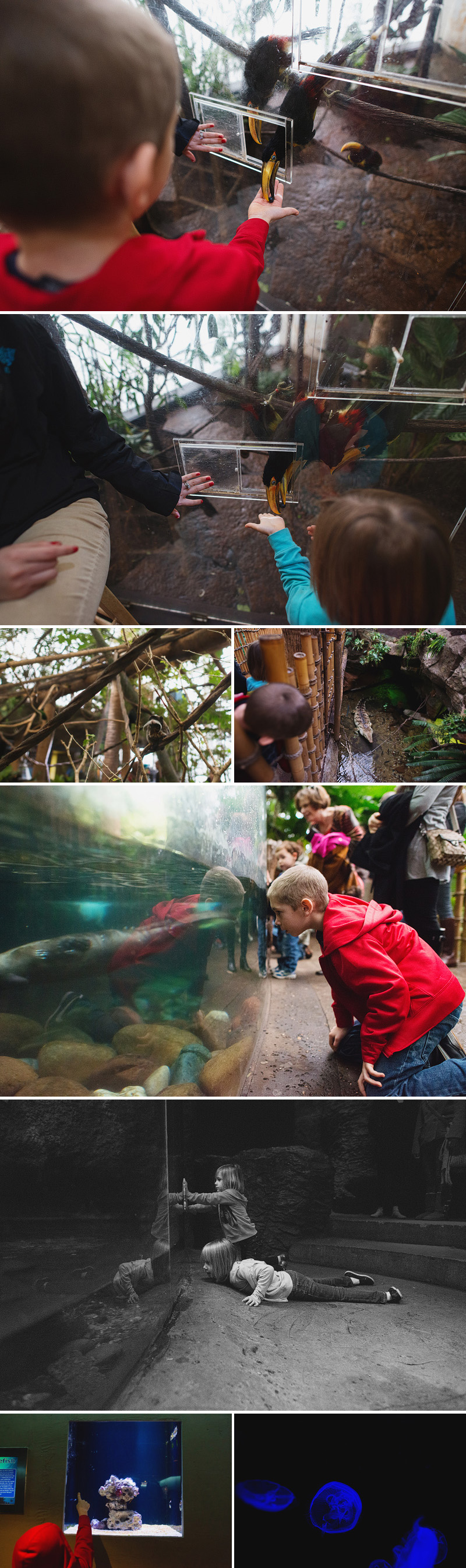 dallas world aquarium things to do with kids in dallas