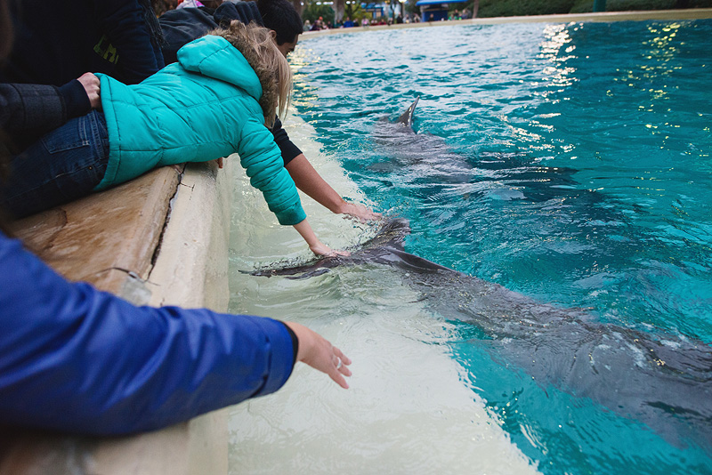 Girl petting dolphins at Sea World in San Antonio.