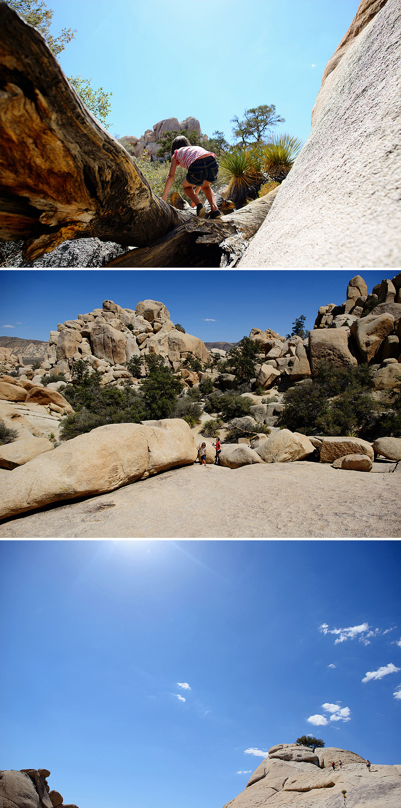 kids hiking in joshua tree