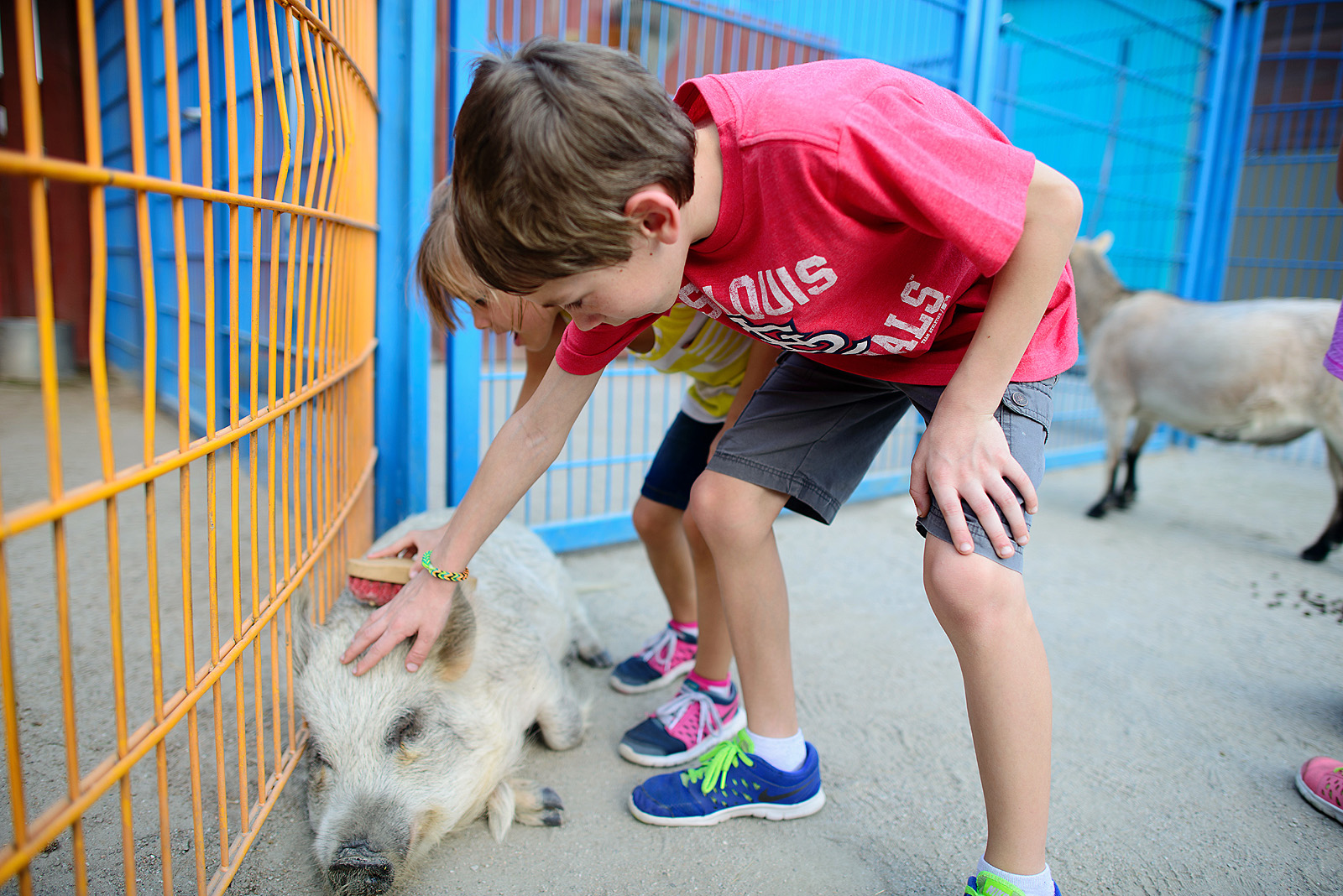 boy pets the pig at rafiki's planet